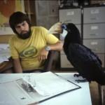 Hornbill in D&M shack at Ok Tedi, PNG; 1982  (E Medley)